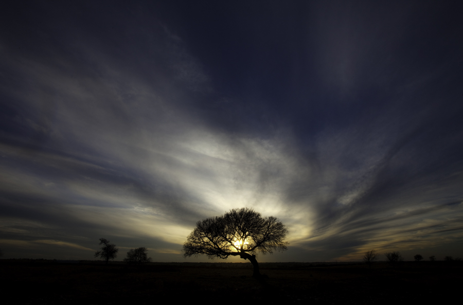 Tree at Sunset, Prosper, Texas