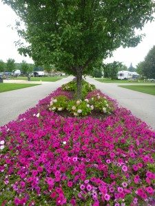 Beautiful Flowers And Landscaping Every Where At River Ridge RV Resort