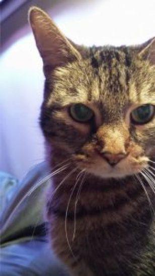 """Baby Kitty"" Tory - Feb 1998 - June 8th 2016"