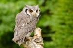 Owls & Raptors_20130915_6474