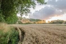 Barley field, Stubbington