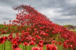 Poppies Wave