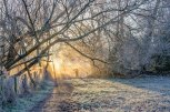 The sun streaming through a mist and frost covered woodland