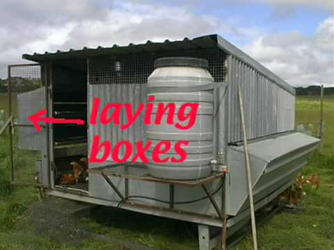 Organic Farming – How to Build sheds for laying hens
