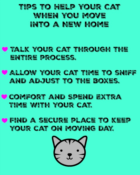 Tips to help your cat when you move into a new home diy for Moving into a new build house tips