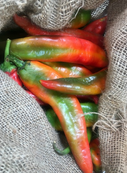 hatch-chiles-in-store-2