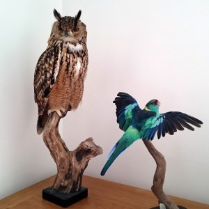 Guide to buying taxidermy for the home
