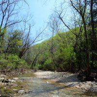 Photo gallery: Piney Creek Wilderness