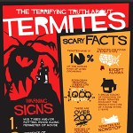 truth about termites feature