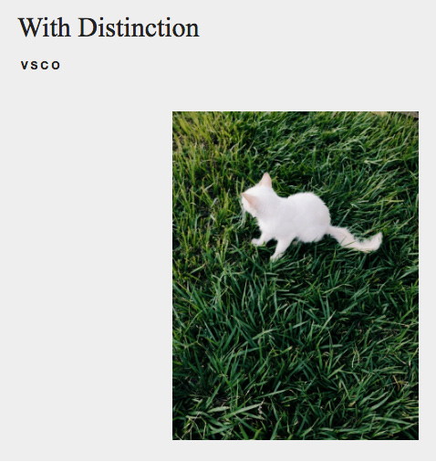 White Cat VSCO Curated Search Result