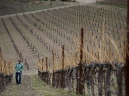 Jason Haas, general manager of Tablas Creek Vineyard, walks up a hill near Paso Robles. That city was one of the first to have a water moratorium. (Bloomberg News file photo)