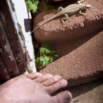 Lizard and My Foot 02-09-12 lo-res