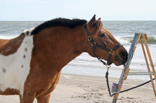 chesapeake boomerang on assateague island