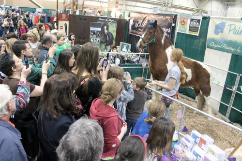chincoteague minnow 2012 pa horse world expo