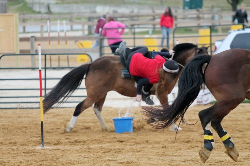 chesapeake boomerang competes in mounted games