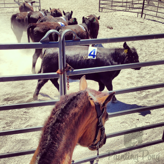 Ranch Sorting at Double Rock // Painting Pony Adventures