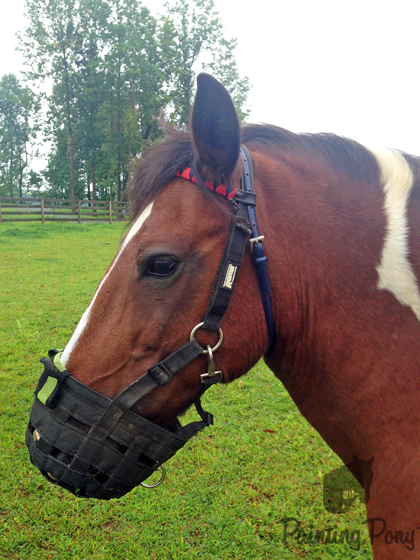 How to Keep a Muzzle on Your Horse // Painting Pony