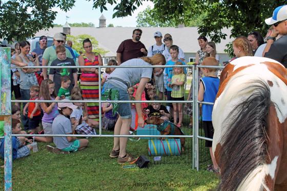 Painting Pony Chincoteague Minnow paints at Ryerss Farm