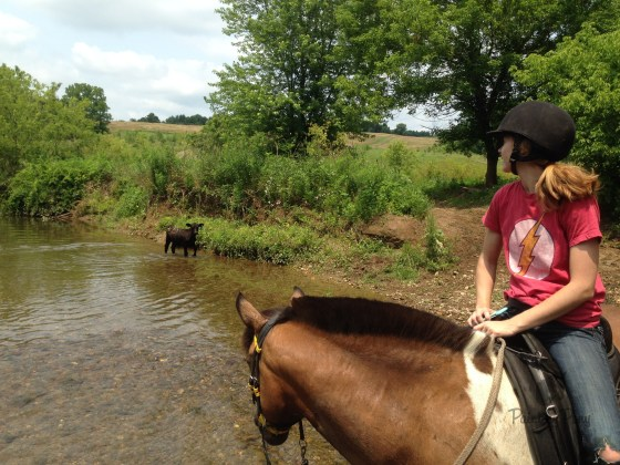 Herding Cows the Cowgirl Way with Painting Pony