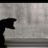 ¿Que hacer cuando llueve?