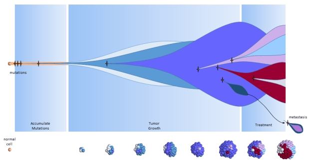 Clonal Evolution Model