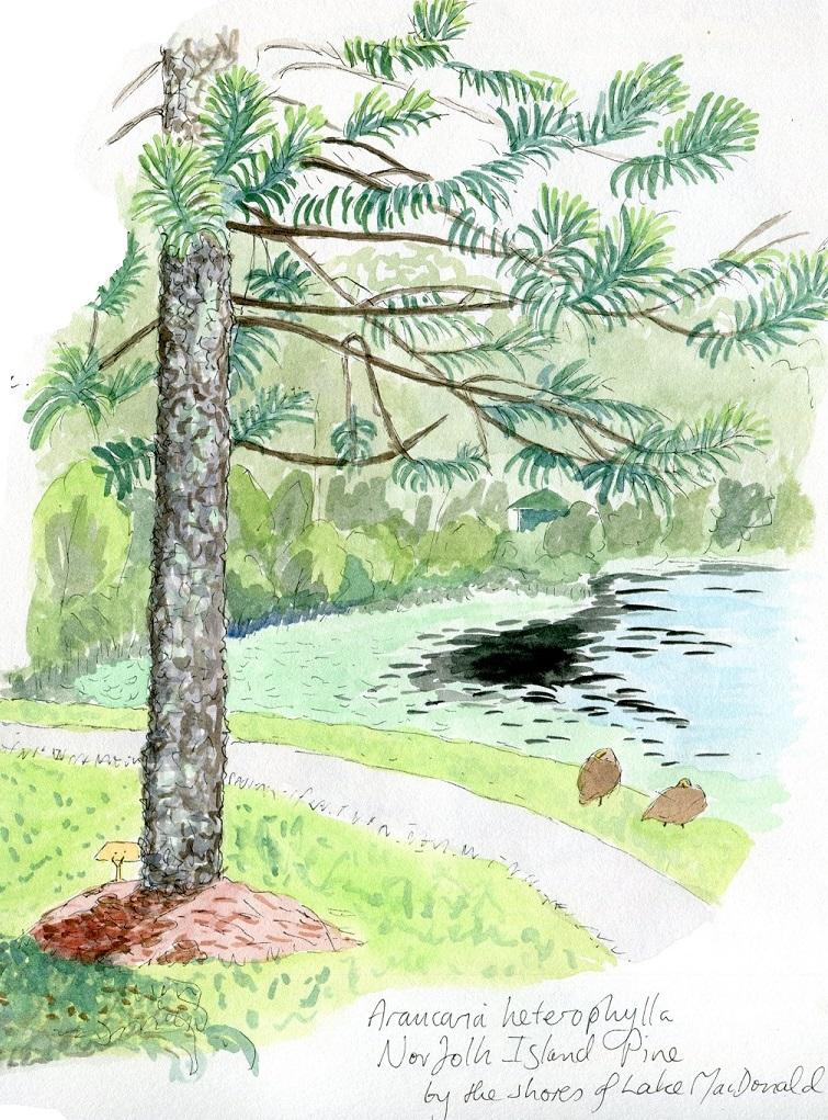 Nature journaling in the Noosa Botanic Gardens