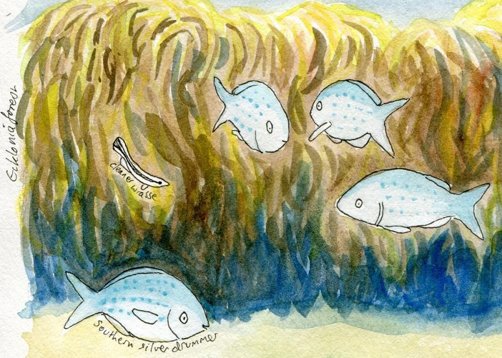 An underwater nature journaling adventure