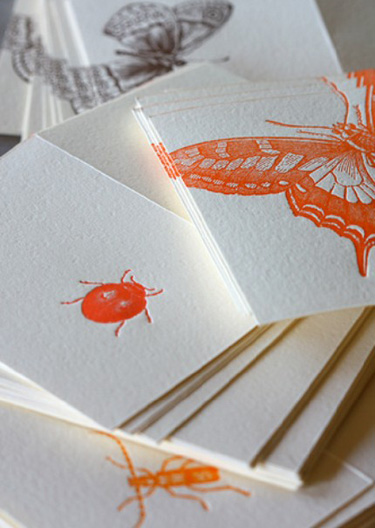 Dingbat Letterpress Butterflies and Bugs