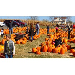 Small Crop Of Halloween Events 2016 Near Me