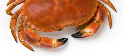 crabe - cancer