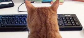 Vidéo. Oubliez le télétravail si vous avez un chat !