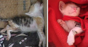 rescue-cat-abandoned-before-after-311__700