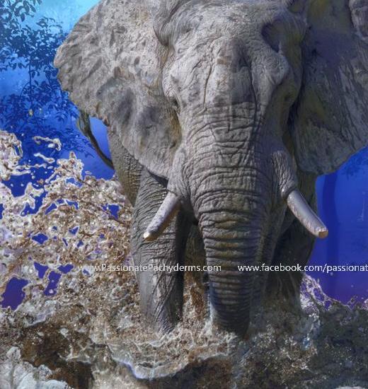 Adam_Rote_Elephant_sm