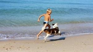 foto_cane_spiaggia