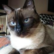 Our Cat Llapis