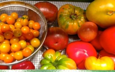 Todays Harvest Basket copy