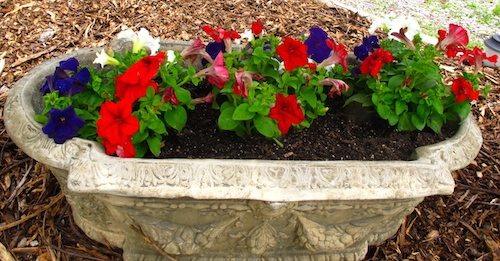 Patriotic Petunias, red, white and blue  flowers will only live as long as I remember to water them.