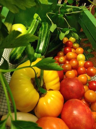 Today's Harvest Basket 8: 11: 14