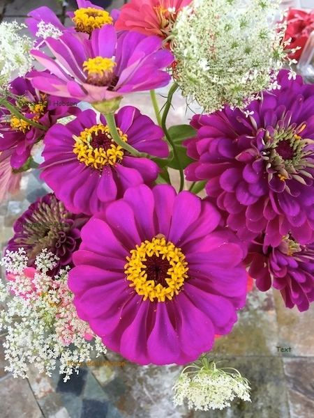 Pink zinnias and Queen Ann's lace.
