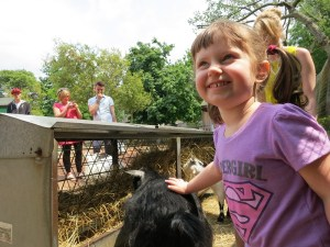 Emerson making friends at the petting zoo...