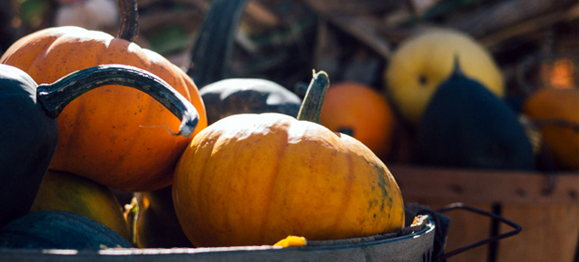 bushel-of-pumpkins