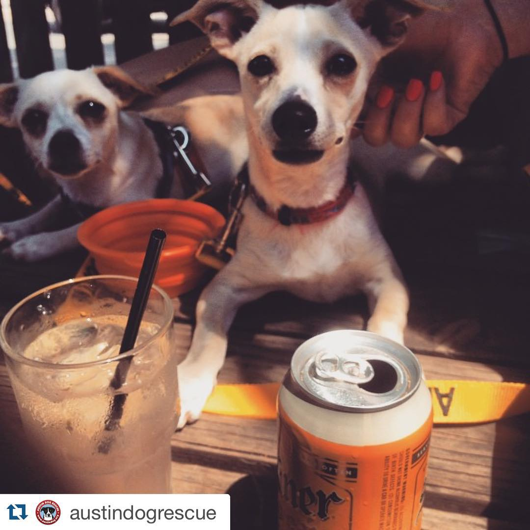 Fullsize Of Can Dogs Drink Beer