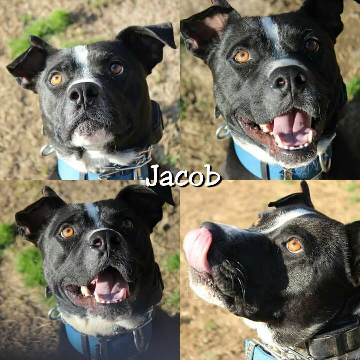 Jacob - ADOPTED!