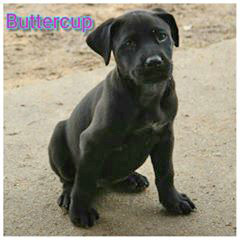 ADOPTED!! Buttercup