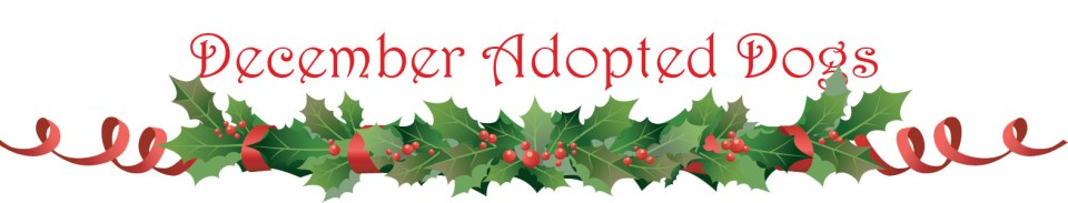 christmas-adopted