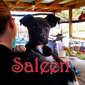 ADOPTED!!!! Meet Saleen. She is a beautiful Shepard mix puppy. She was saved from Aiken county shelter 12-11-15. She's a very sweet puppy who already knows how to sit. She does great with other dogs and is excellent with kids! She goes for another round of shots on 12-15, and then will be scheduled to be spayed! And then available for adoption after that. Her adoption fee is 100.00