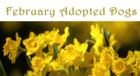 february-adopted-dogs