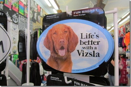 Life is Better With a Vizsla
