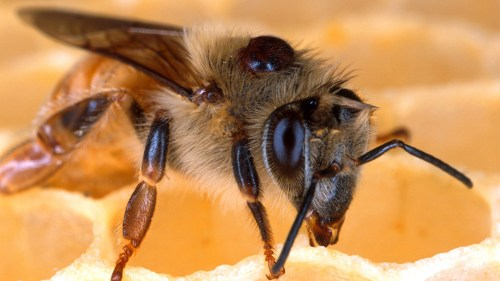 Medium Of Do Bees Sleep