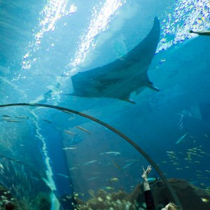 5 Reasons to Visit the Georgia Aquarium
